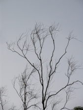 Dry-tree-branches