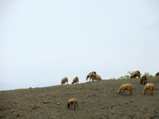 Sheep-grazing-on-the-hill