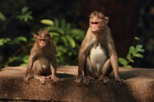 Monkeys-sitting-in-forest